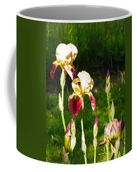 Iris Coffee Mug featuring the photograph Iris In The Sun by Nick Kirby