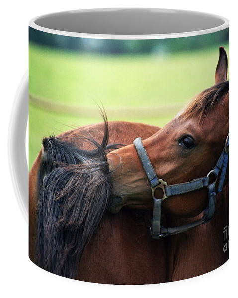 Horse Coffee Mug featuring the photograph Is It My Tail by Angel Ciesniarska