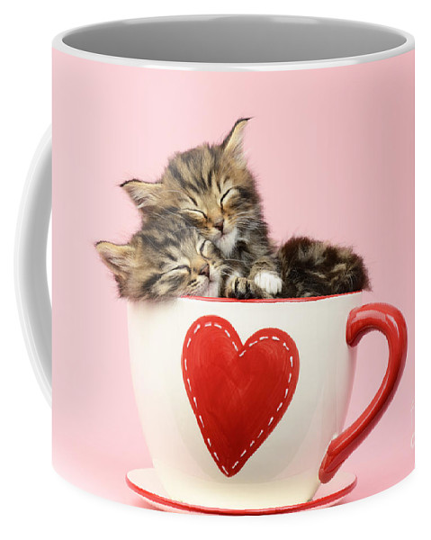 Tabby Coffee Mug featuring the photograph It Must Be Love by MGL Meiklejohn Graphics Licensing