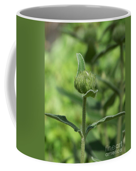 Plants Coffee Mug featuring the photograph Its A Green World by Kathy McClure