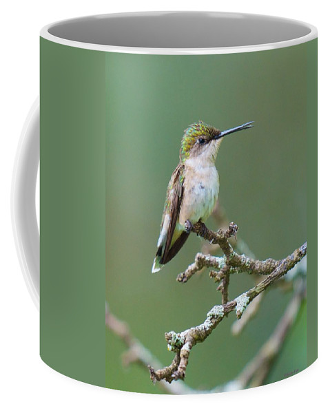 Birds Coffee Mug featuring the photograph Its Like Grand Central Station Here by Kristin Hatt