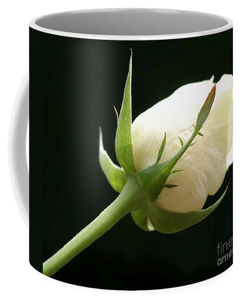 Ivory Coffee Mug featuring the photograph Ivory Rose Bud by Carol Lynch