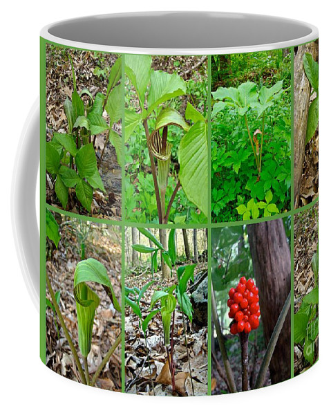 Jack In The Pulpit Coffee Mug featuring the photograph Jack-in-the-pulpit Wildflower  Arisaema Triphyllum by Mother Nature