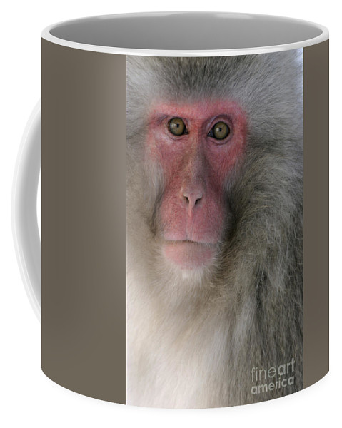 Japanese Macaque Coffee Mug featuring the photograph Japanese Macaque by Jean-Louis Klein and Marie-Luce Hubert
