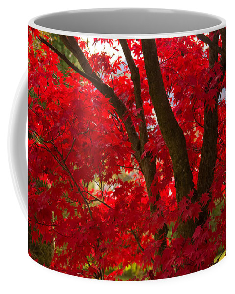 Maple Coffee Mug featuring the photograph Japanese Maple by Corinna Stoeffl