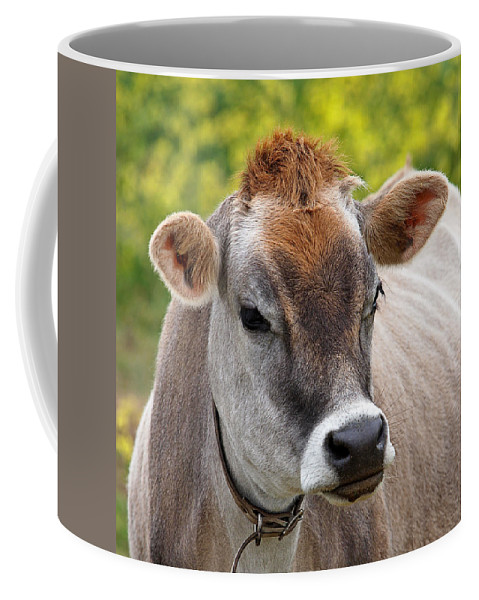 Jersey Cow Coffee Mug featuring the photograph Jersey Cow With Attitude - Square by Gill Billington
