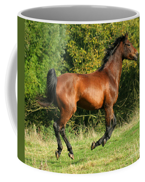 Horse Coffee Mug featuring the photograph Jump Jump Jump by Angel Tarantella