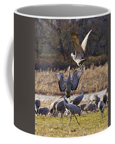 Jumping For Joy Coffee Mug featuring the photograph Jumping For Joy by Wes and Dotty Weber