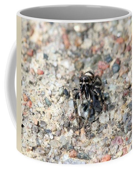 Jumping Spider Coffee Mug featuring the photograph Jumping Spider Face On by Doris Potter