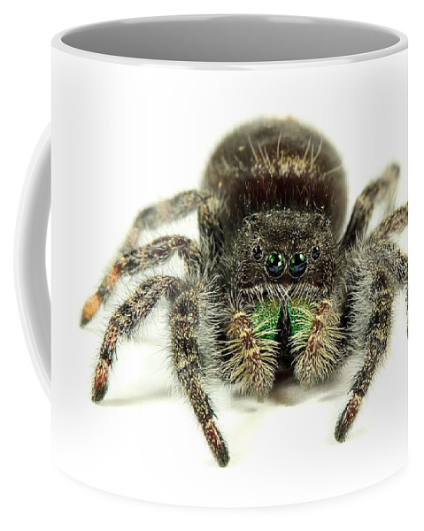 Spider Coffee Mug featuring the photograph Jumping Spider by Paul Fell