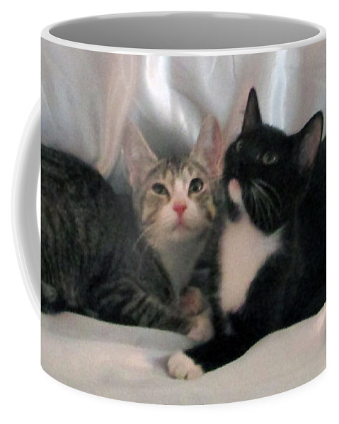 Kittens Coffee Mug featuring the photograph June And Jetta by Debi Singer