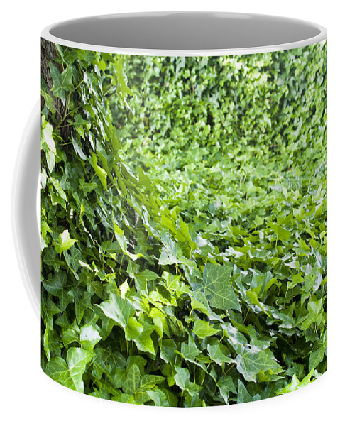 Bright Green Coffee Mug featuring the photograph Jungle Vines by Tim Hester