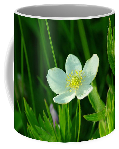 Flowers Coffee Mug featuring the photograph Just A Little White And Yellow Blossom by Jeff Swan