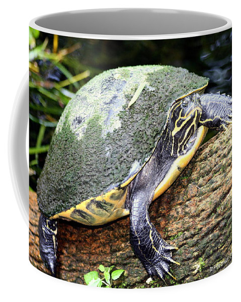 Nature Coffee Mug featuring the photograph Just Chilling by Debra Forand