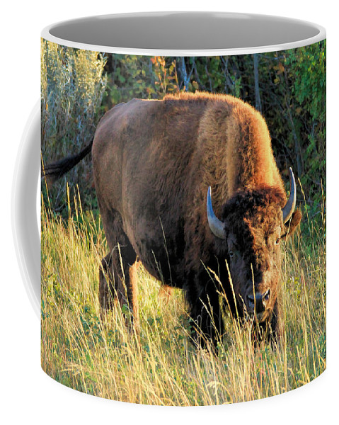 American Bison Coffee Mug featuring the photograph Just Me And You by Bruce Nikle