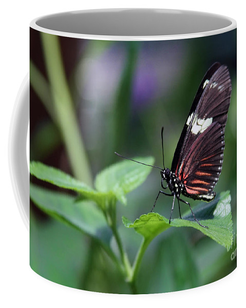 Butterfly Coffee Mug featuring the photograph Just Resting by Jayne Carney