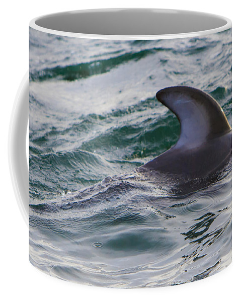 Dolphins Coffee Mug featuring the photograph Just The Dorsal by Scott Campbell