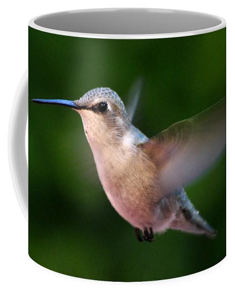 Juvenile Coffee Mug featuring the photograph Juvenile Anna Hummingbird by Jay Milo