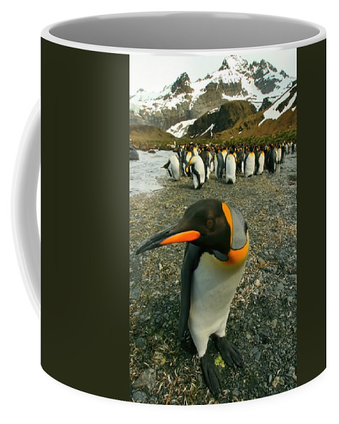 Juvenile King Penguin Coffee Mug featuring the photograph Juvenile King Penguin by Amanda Stadther