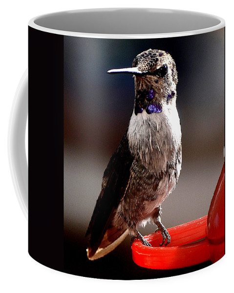 Hummingbirds Coffee Mug featuring the photograph Juvenile Male Anna On Perch by Jay Milo