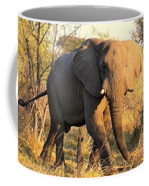 Elephants Coffee Mug featuring the photograph Kalahari Elephant by Amanda Stadther