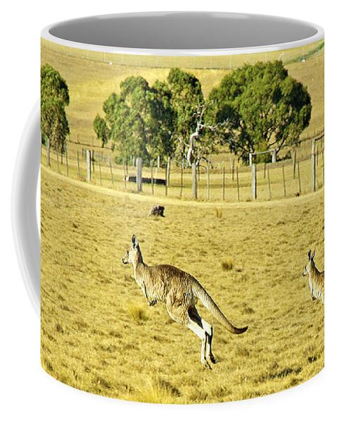 Kangaroos Coffee Mug featuring the photograph Kangaroo Hop by Evan Peller