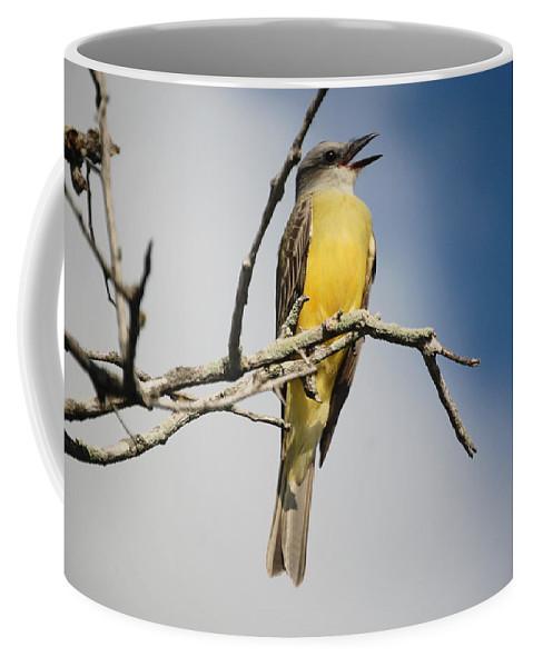 Bird Coffee Mug featuring the photograph Kb Wondering by Leticia Latocki