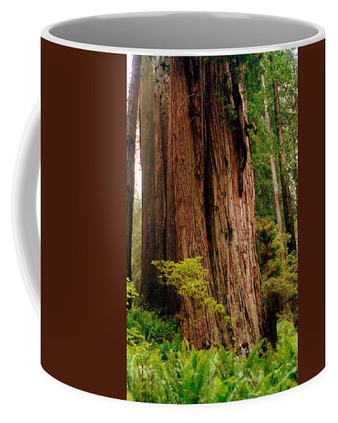 Ferns Coffee Mug featuring the photograph Kevin And The Big Tree - Redwood National Forest by Michelle Calkins