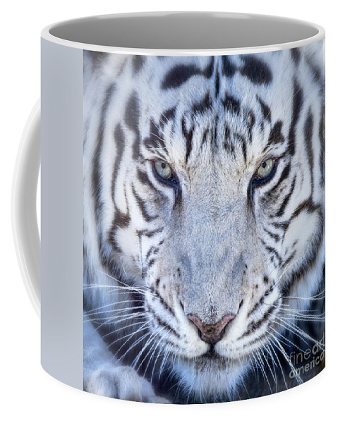 Tiger Coffee Mug featuring the photograph Khan The White Bengal Tiger by Dianne Phelps