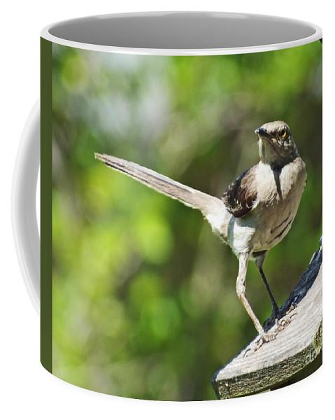 Mockingbird Coffee Mug featuring the photograph King Of The Feeder by Lizi Beard-Ward