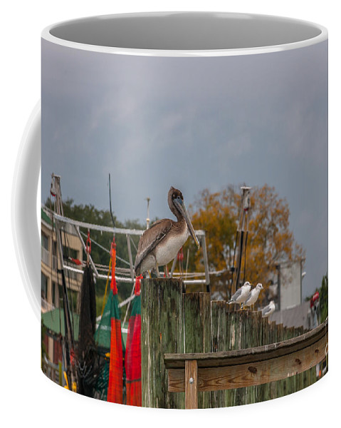 Pelican Coffee Mug featuring the photograph King Pelican by Dale Powell