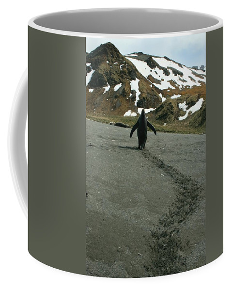 King Penguins Coffee Mug featuring the photograph King Penguin by Amanda Stadther