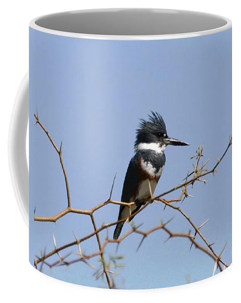 Kingfisher On Mesquite Tree Coffee Mug featuring the photograph Kingfisher On Mesquite Tree by Tom Janca