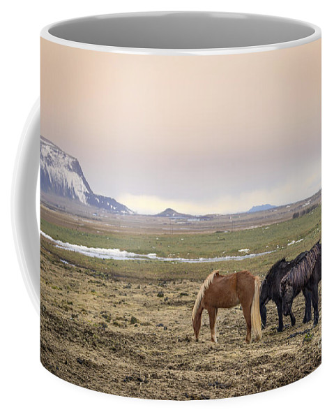 Kremsdorf Coffee Mug featuring the photograph Kings Of The Nordic Twilight by Evelina Kremsdorf