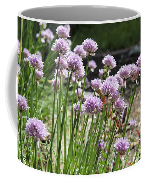Chives Coffee Mug featuring the photograph Kitchen Garden Chives by Teresa Mucha