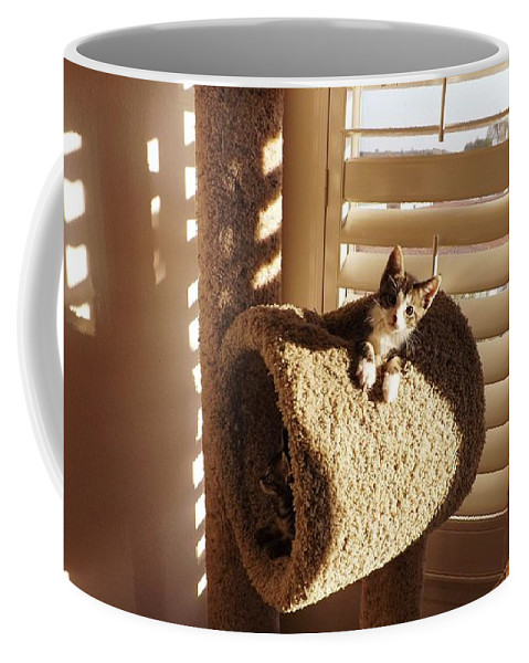Kittens Coffee Mug featuring the photograph Kitten Peeks Through Hole In Condo by Jussta Jussta