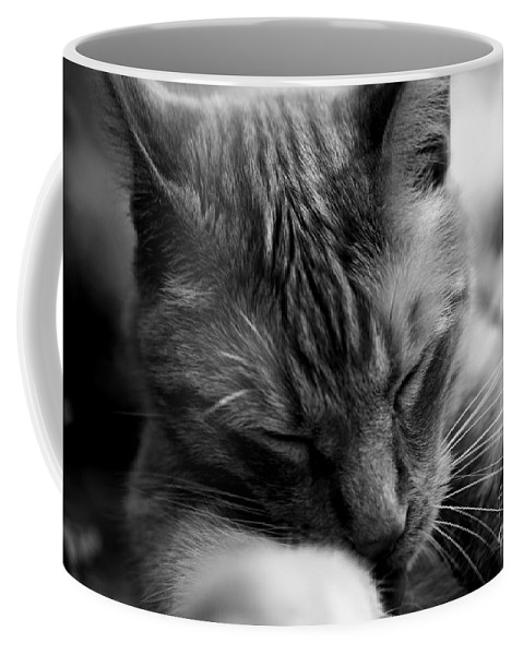 Cat Coffee Mug featuring the photograph Kitty by David Rucker
