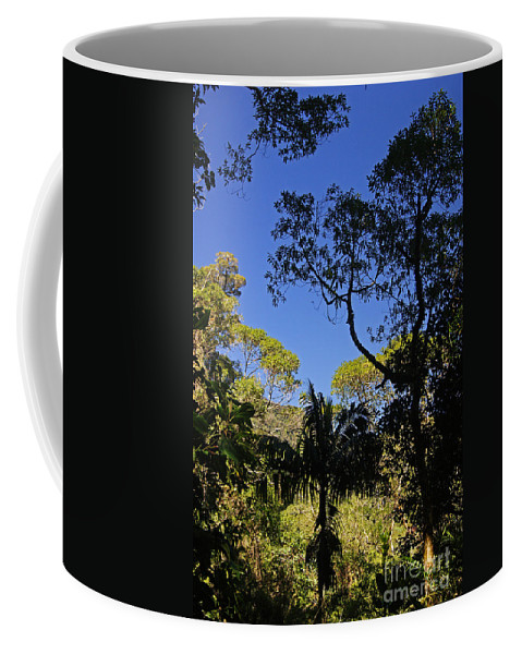 Nature Coffee Mug featuring the photograph jungle in La Amistad National Park Panama 1 by Rudi Prott