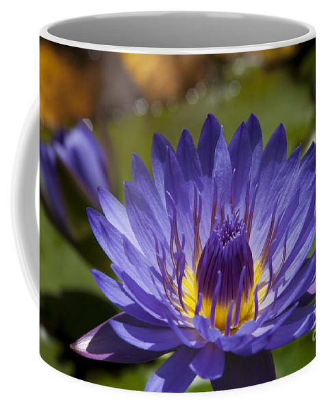 Star Of Zanzibar Coffee Mug featuring the photograph La Fleur De Lotus - Star Of Zanzibar Tropical Water Lily by Sharon Mau