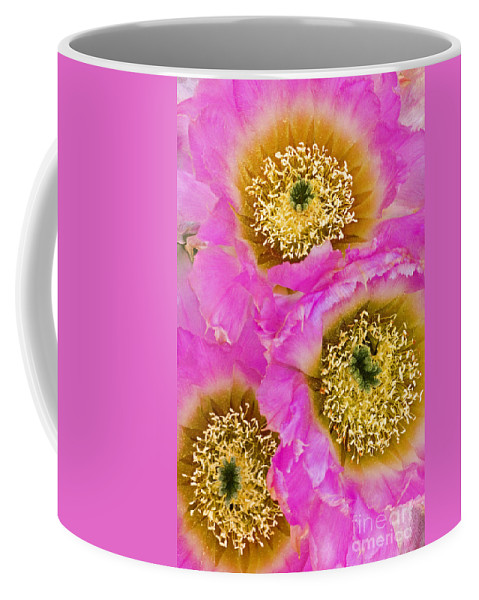 Lace Cactus Coffee Mug featuring the photograph Lace Cactus Flowers by Dave Welling