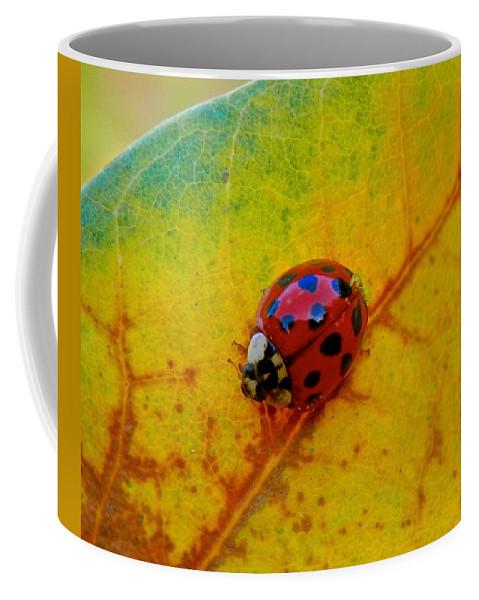 Ladybug Coffee Mug featuring the photograph Lady Bug 3 by Joe Wyman