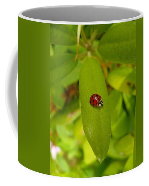 Lady Coffee Mug featuring the photograph Lady Bug Leaf by Nicki Bennett