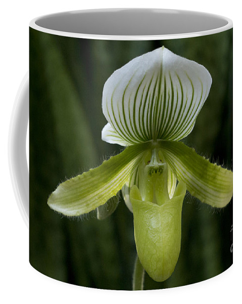 Lady Slipper Coffee Mug featuring the photograph Lady Slipper Orchid by Meg Rousher