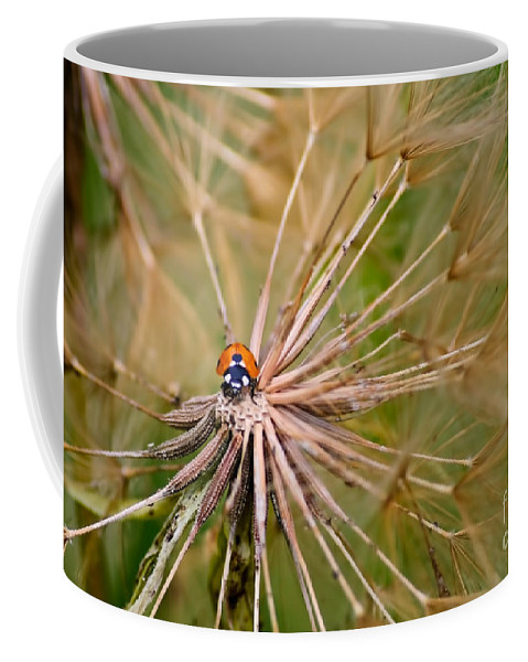 Ladybugs Coffee Mug featuring the photograph Ladybug by Diego Re