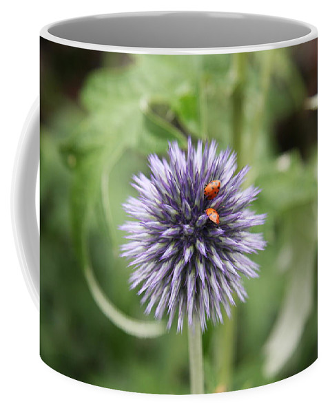 Flower Coffee Mug featuring the photograph Ladybugs by Christiane Schulze Art And Photography