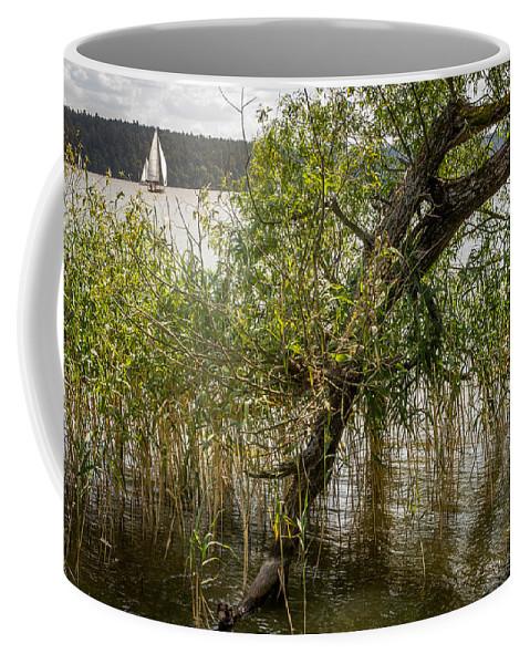 Mikolajki Coffee Mug featuring the photograph Lake Tree by Pati Photography