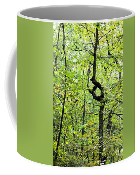 Landmark In A Dense Forest Coffee Mug featuring the photograph Landmark In A Dense Forest by Maria Urso