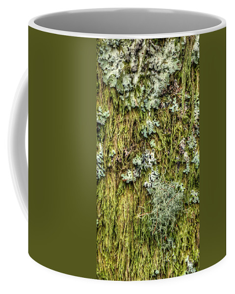 Moss Coffee Mug featuring the photograph Larch Tree Beard Moss by Weston Westmoreland