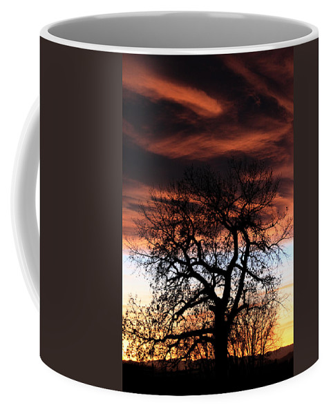 Sunset Coffee Mug featuring the photograph Large Cottonwood At Sunset by Shane Bechler