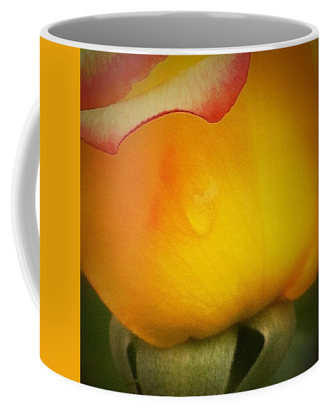 Yellow Rose Coffee Mug featuring the photograph Last Drop by Patricia Caldwell